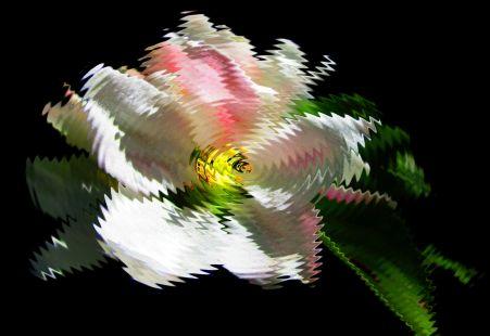 Wellen-Blüte